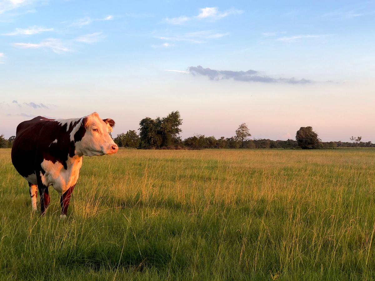 Coastal Plains Meat Company | Sustainable